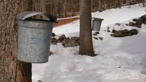 bucketscropped